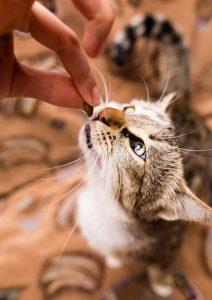 Cat taking treat