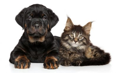 10 Intriguing Differences Between Cats And Dogs: Info For Pet Owners