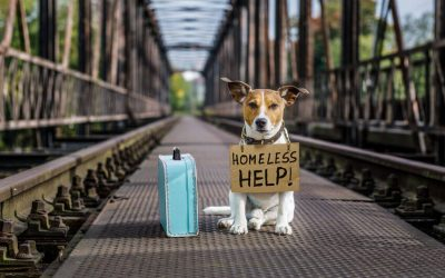 Help For Homeless Pets: How Can You Help Local Shelters And Rescues?