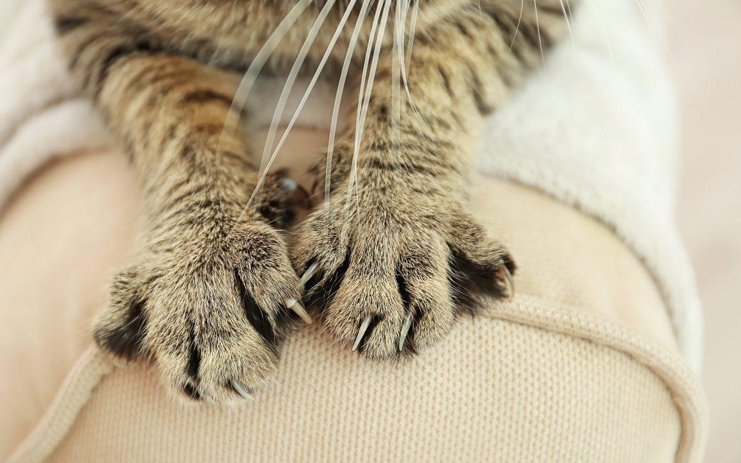 Diy Pets Making A Cardboard Cat Scratcher At Home