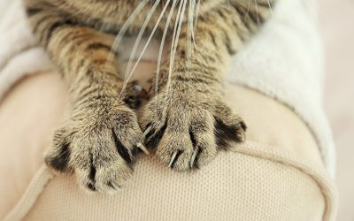 Tabby cat paws on backrest
