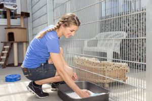 woman at animal shelter, cleaning cat litter pan