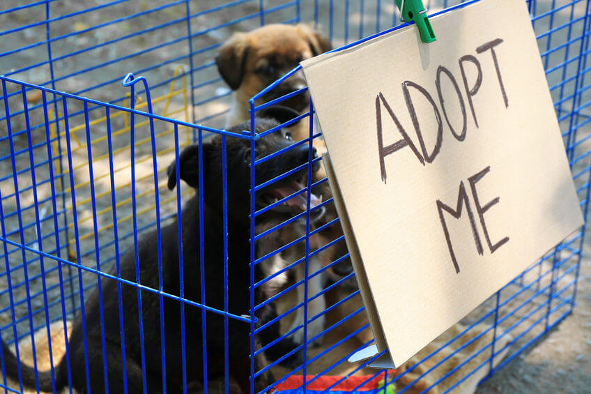 Wanting To Adopt A New Pet Puppy? Read These Things To Consider Before Getting A Dog