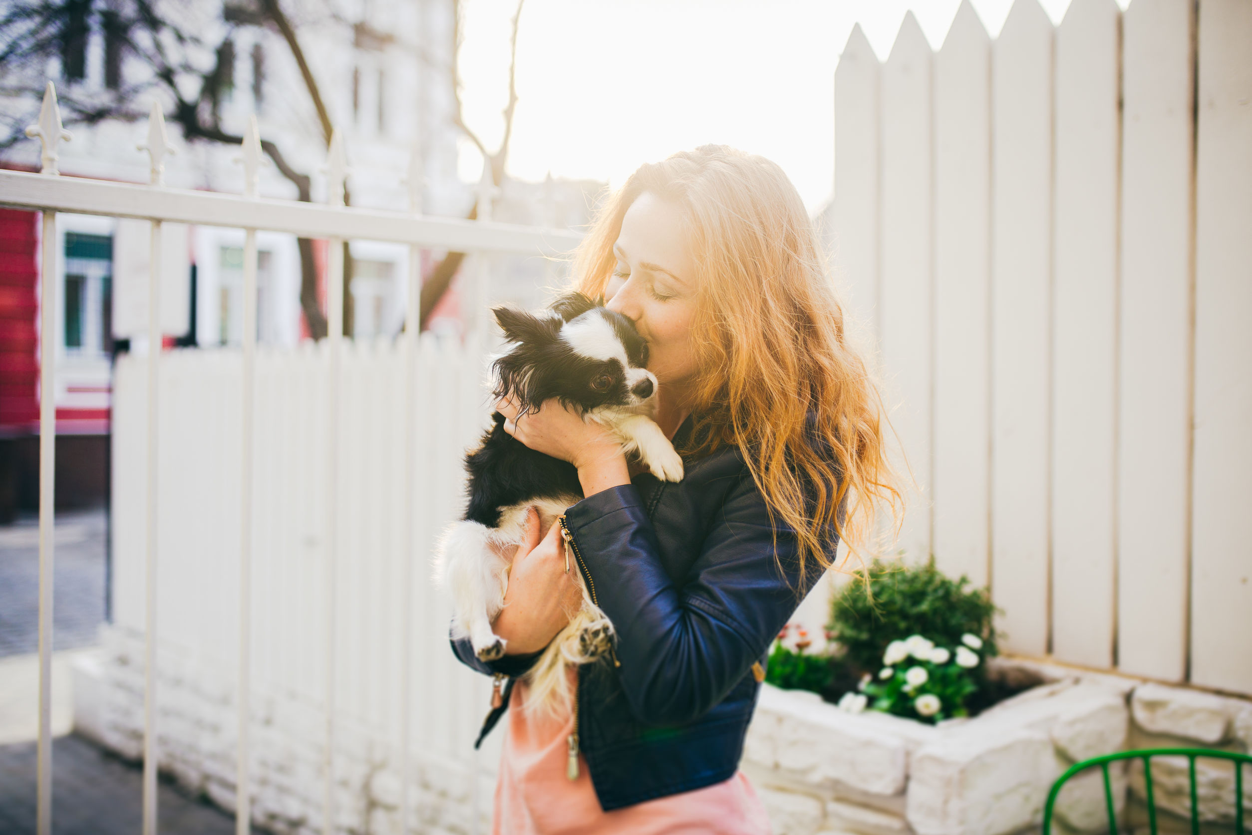 getting an emotional support dog   Ultimate Pet Nutrition