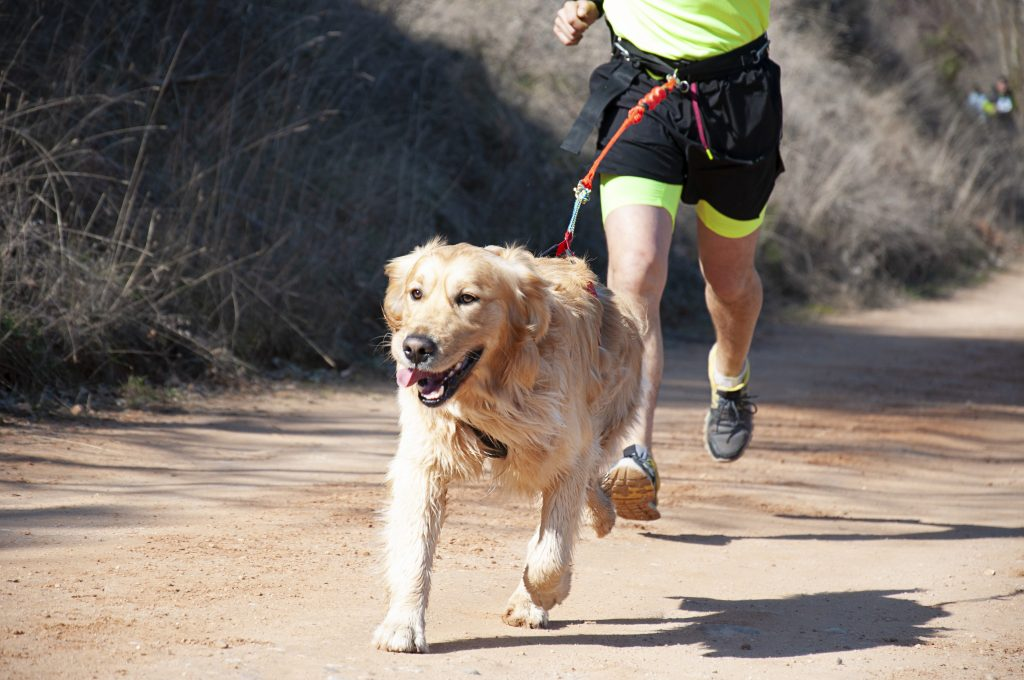 running with your dog | Ultimate Pet Nutrition