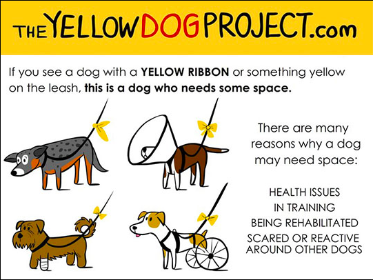 yellow dog project | Ultimate Pet Nutrition