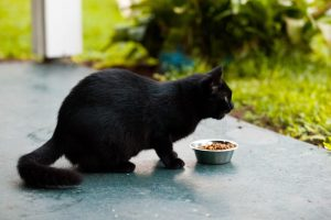 black cat eating outside | Ultimate Pet Nutrition