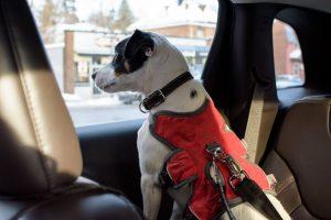 dog car safety | Ultimate Pet Nutrition