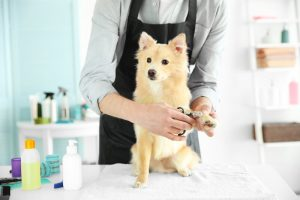 dog grooming | Ultimate Pet Nutrition