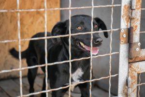 dog in animal shelter | Ultimate Pet Nutrition