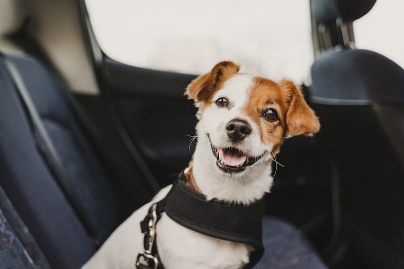 Safety Tips For Taking Your Dog Driving