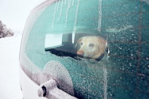 dog in cold car | Ultimate Pet Nutrition