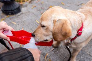 dog water bottle | Ultimate Pet Nutrition