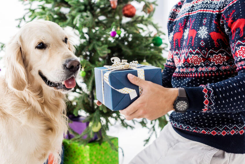 giving dog a gift | Ultimate Pet Nutrition