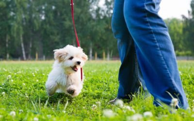 leash training puppy | Ultimate Pet Nutrition