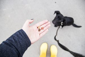 leash training with treats | Ultimate Pet Nutrition