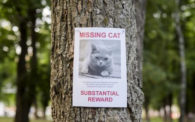 How To Find A Lost Cat Or Dog: Find Your Missing Pet