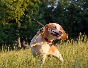 puppy pulling leash | Ultimate Pet Nutrition