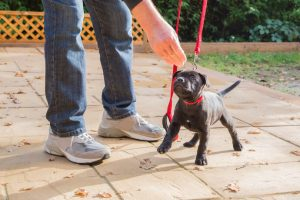training puppy | Ultimate Pet Nutrition