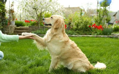 Try This List Of Unique Dog Tricks To Really Impress Your Friends