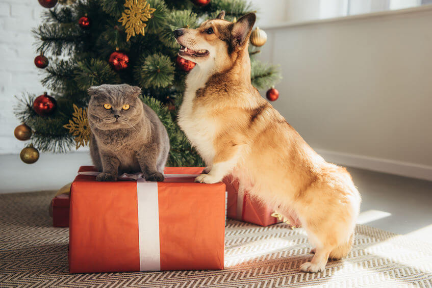 The Holidays Are Coming: Try These Awesome Presents For Dog And Cats