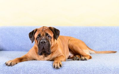 Pet Care Tips For Tall And Large Breed Dogs