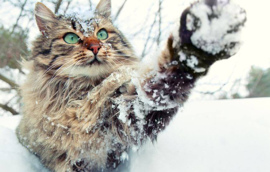 Info For Pet Parents: Health And Safety For Cats During The Winter