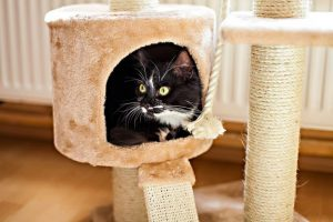 cat in cat tree house