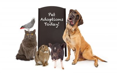 "variety of animals with ""Pet Adoption Today"" sign"