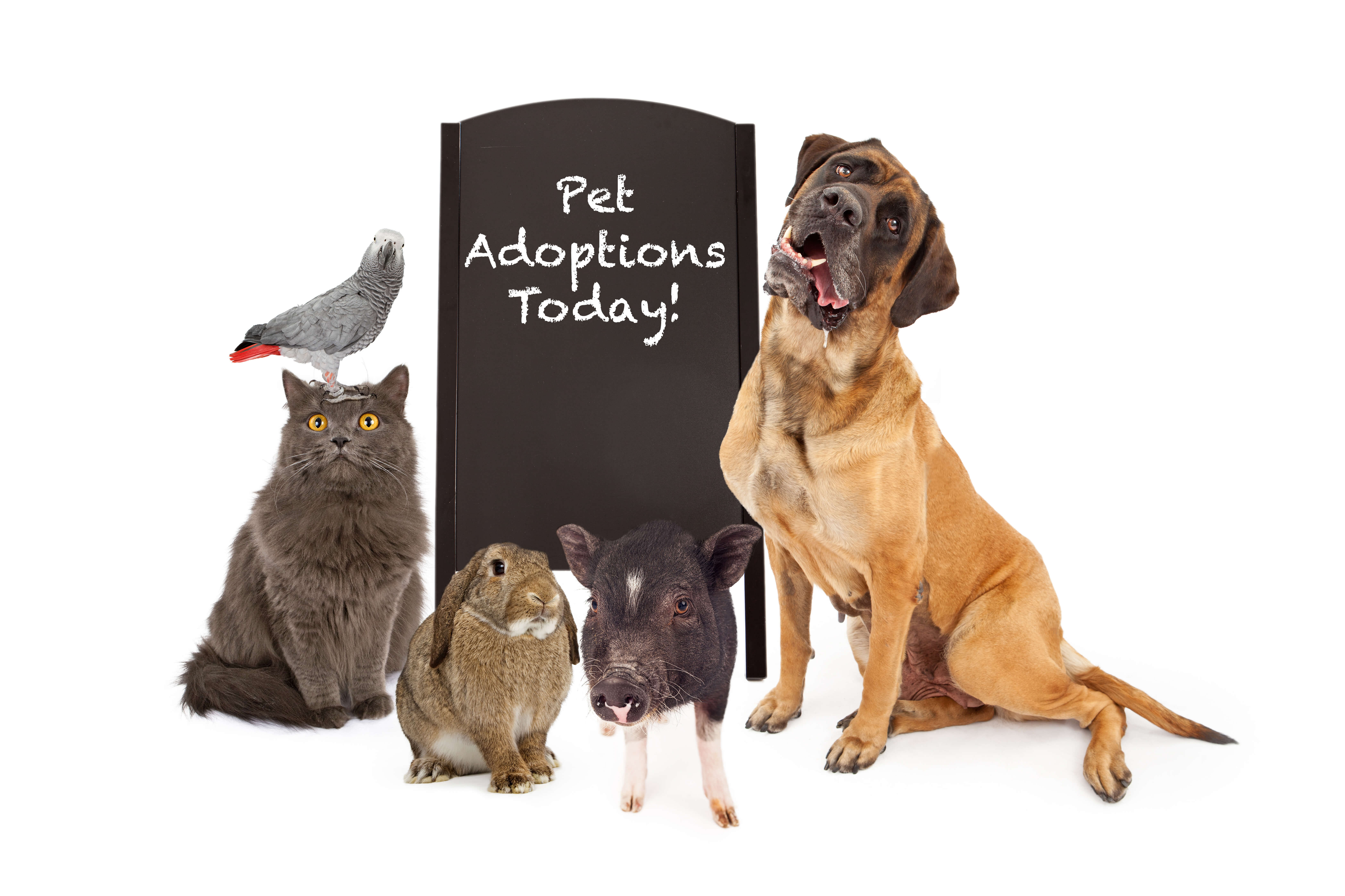 """variety of animals with """"Pet Adoption Today"""" sign"""