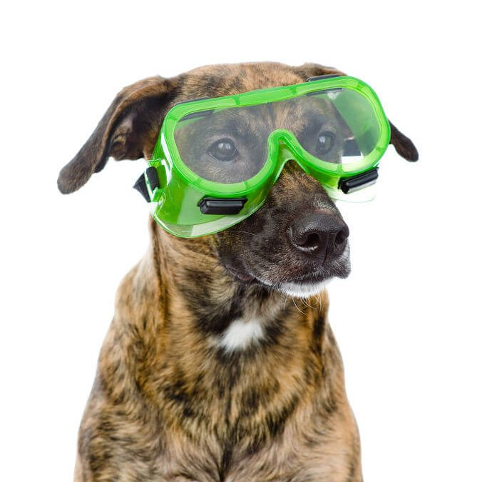 Pet Guides: Safety In The Home For Your Furry Friends