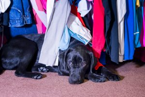 dog hiding in clothes
