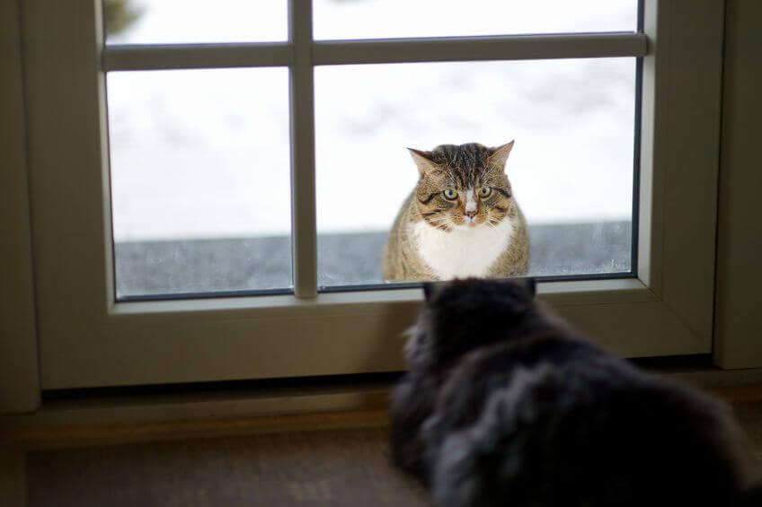 Indoor Vs Outdoor Cat: What Should It Be?