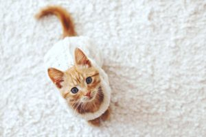 Ginger kitten in a sweater