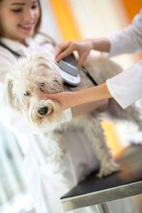 vet scanning a microchipped dog