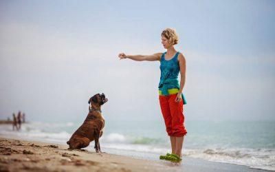 Woman training dog on beach