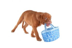 dog carrying a shopping bag