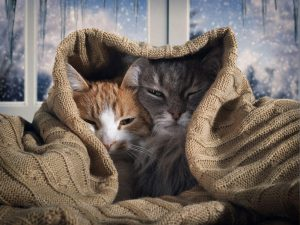 Two tabby cats sleeping under blanket in front of winter window