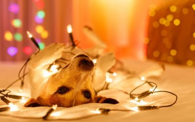 dog with holiday lights