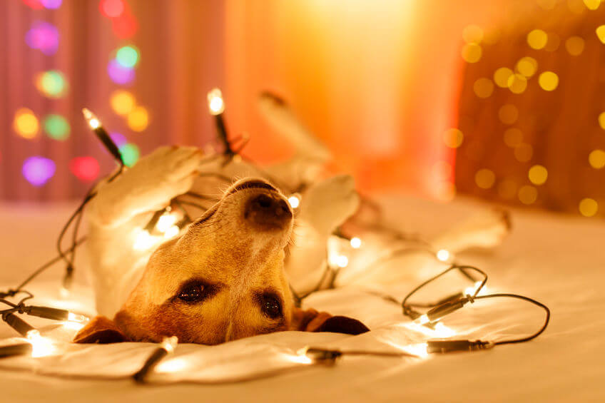 Pet Holidays: Tips To Keep Your Dog Safe and Happy In Hectic Times