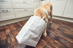 dog with head in grocery bag