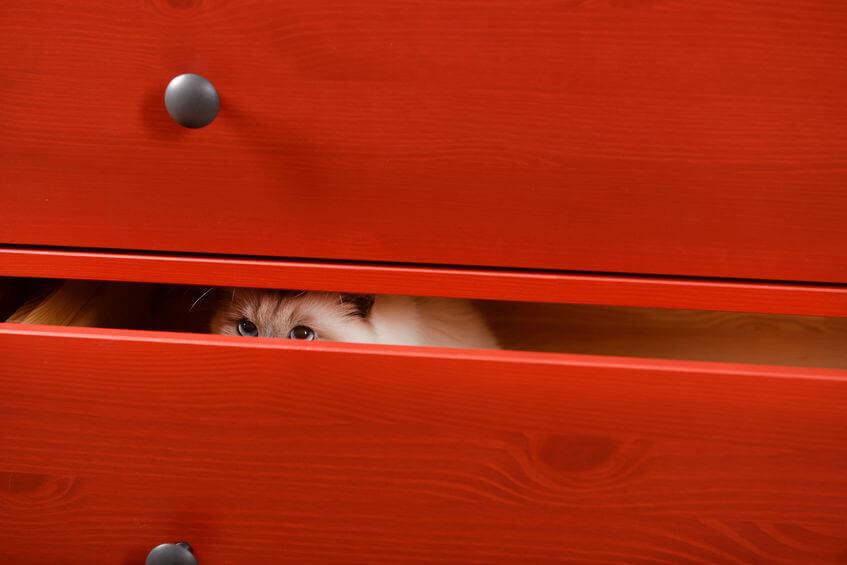 cat hiding in dresser drawer