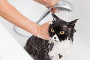 bathing cat | Ultimate Pet Nutrition