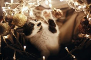 cat and christmas lights | Ultimate Pet Nutrition