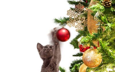cat christmas tree | Ultimate Pet Nutrition