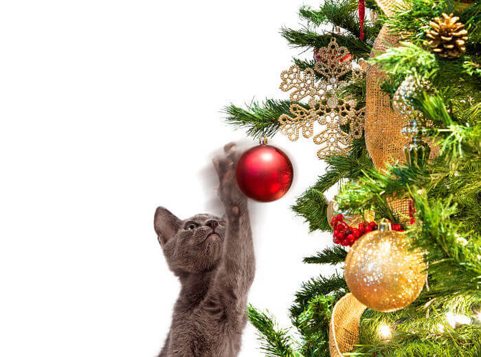 "Holiday Season Pet Safety: How To ""Cat-Proof"" Your Christmas Tree And Decorations"