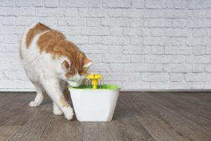 cat drinking fountain | Ultimate Pet Nutrition