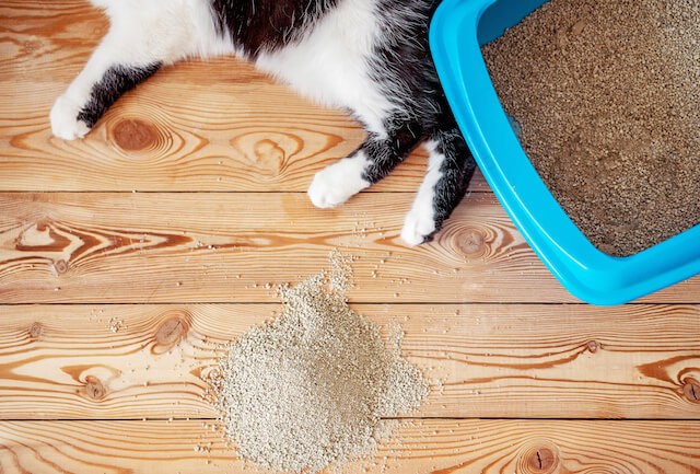 cat litter box accident | Ultimate Pet Nutrition