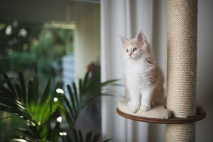 cat on cat tree | Ultimate Pet Nutrition