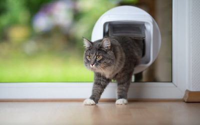 cat pet door | Ultimate Pet Nutrition